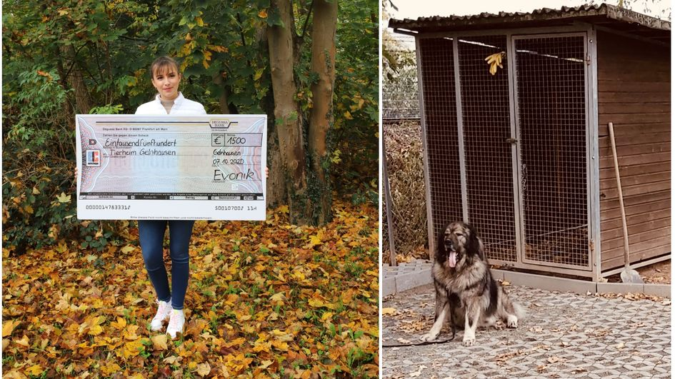 """Auszubildende Aleksandra Dobos überbringt den Spendenscheck für Loki und sein """"Rudel"""" im Tierheim Gelnhausen. Fotos: Evonik Industries (links)/Tierheim Gelnhausen (rechts)"""